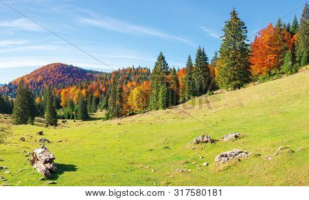 Apuseni Natural Park In Autumn. Amazing Morning Scenery Of Varasoaia Meadow, Bihor, Romania. Forest