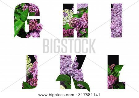 Letters G H I J K L Of Beautiful Flowers And Branches Of Orchids