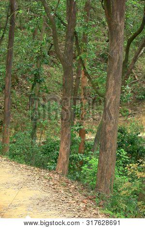 Kam Shan Country Park At Hong Kong