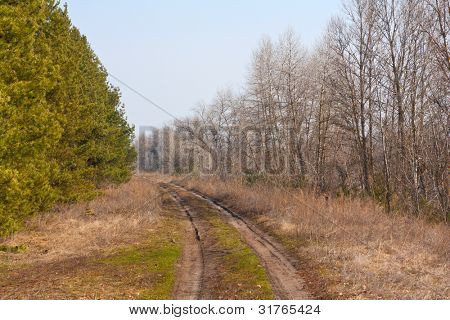Countryside road in forest