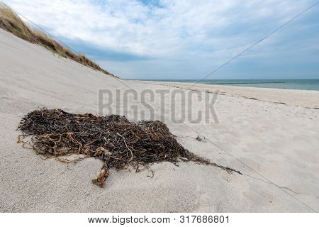 German Baltic Coast With Algae, Seagrass And Sand Dunes, Grass, Water And Blue Sky