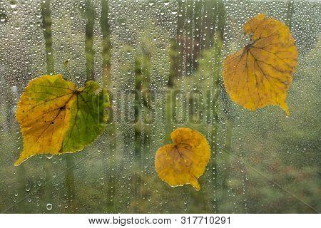 Autumn Leaves On The Windowpane. Autumn Background.