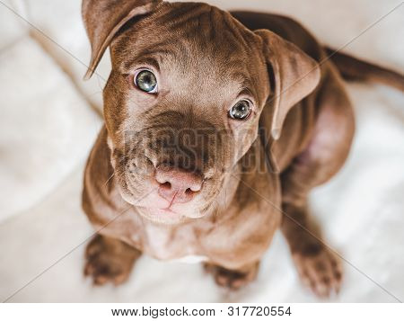 Young, Charming Puppy. Studio Photo. Pets Care