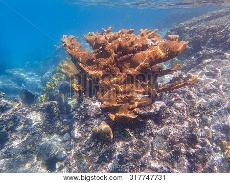 Corals Are Marine Invertebrates Within The Class Anthozoa Of The Phylum Cnidaria. They Typically Liv