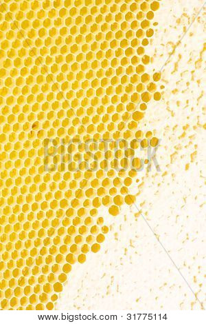 Yellow honeycomb wax cell detail texture background