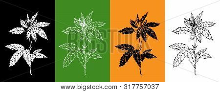 Vector Set With Hemp Plant. Isolated Cannabis Leaves On Black, Green, Orange, White Background. For