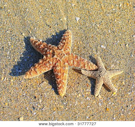 Two starfishes on sand