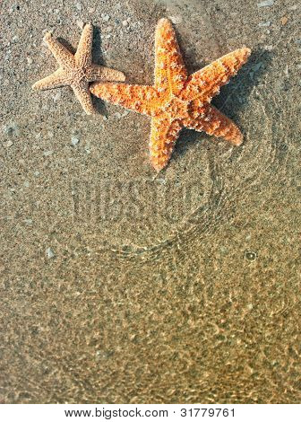 Two starfish and ocean water on sandy tropical beach