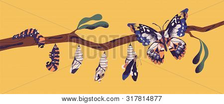Butterfly Life Cycle - Caterpillar, Larva, Pupa, Imago Eclosion. Stages Of Metamorphosis, Growth And