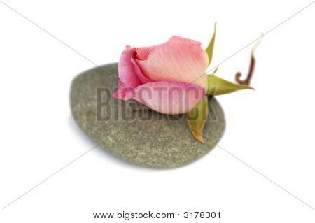 Rose On Stone