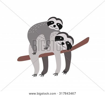 Sloth With Baby Resting On Tree Branch Isolated On White Background. Family Of Cute Funny Wild Arbor