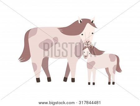 Horse And Foal Or Colt Isolated On White Background. Family Of Wild Or Domestic Herbivorous Animals.