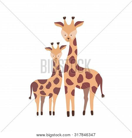 Giraffe With Calf Isolated On White Background. Family Of Cute Wild African Savannah Herbivorous Ani