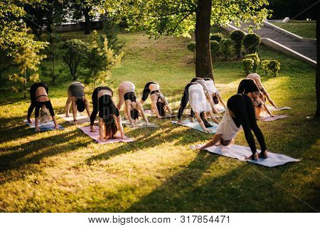 Group Of Young Women Are Stretching In Downward Facing Dog Exercise, Adho Mukha Svanasana Pose. Grou