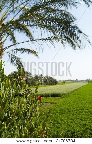 Green tropical field