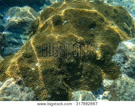 An Underwater Photo Of Beautifully Patterned Coral. Corals Are Marine Invertebrates Within The Class