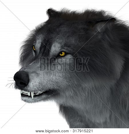 Dire Wolf Head 3d Illustration - The Carnivorous Dire Wolf Lived In North And South America During T