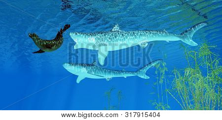 Tiger Shark Attacks Seal 3d Illustration - A Fur Seal Makes A Hasty Retreat As Two Tiger Sharks Purs