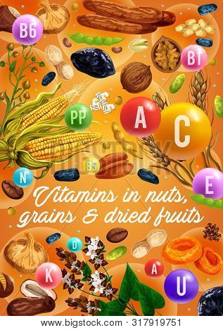 Nuts, Organic Cereals And Dried Fruits, Healthy Food Vitamins. Vector Superfood Coconut, Wheat And R