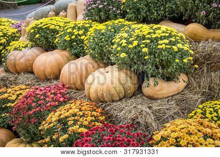 Many Colorful Organic Pumpkins With Hay And Flowers At The Farmers Market. Thanksgiving Day And Harv
