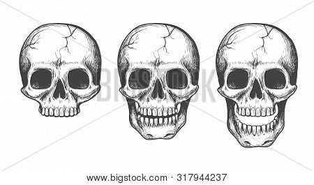 Skull Face Sketch Isolated. Scary Vectors Skulls Illustration With Jaw For Tattoo, Anatomy Or Human
