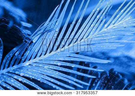 Close Up Of Exotic Tropical Leaves Colored In Blue Light