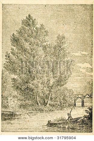 White willow - gammal illustration av okänd konstnär från Botanika Szkolna na Klasy Nizsze, författare Joze