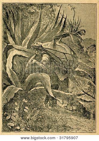 Mexikanska med en läder väska skörd agave juice-gammal illustration av okänd konstnär från Botanika Sz