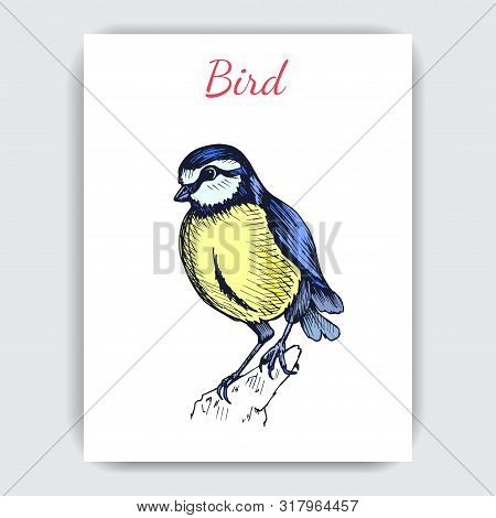 Sketch Hand Drawn Card With Titmouse. Animals Illustration Birds.