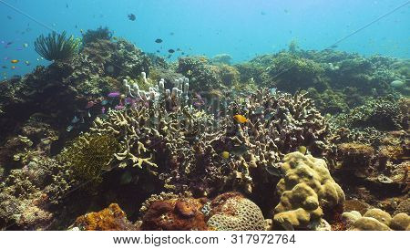 Tropical Fishes And Coral Reef At Diving. Beautiful Underwater World With Corals And Fish. Camiguin,