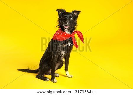 Cute Black Dog With Neckerchief Sitting On Yellow Background