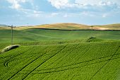 Farmland and grasses, with powerlines in the Palouse region of Washington State, near Colfax, WA poster