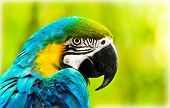 Exotic colorful African macaw parrot, beautiful close up on bird face over natural green background, bird watching safari, South Africa wildlife poster