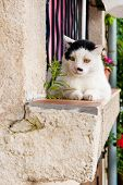 White cat on the balcony outdoor poster