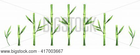 Green Bamboo Watercolor Illustration Isolated On White Background. Bamboo Branches And Leaves Clip A