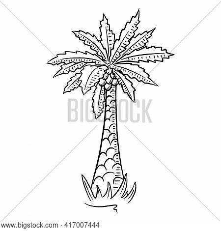 Palm. Tropical Tree. Exotic Flora. Cartoon Style.