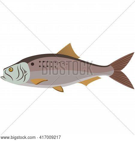 Vector Fish Atlantic Menhaden Ocean Underwater Wildlife