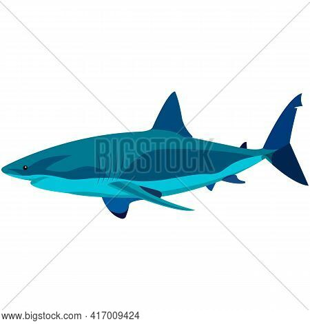 Vector White Shark Aquatic Creature Illustration Isolated