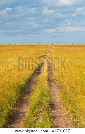 Path Crossing The Savannah
