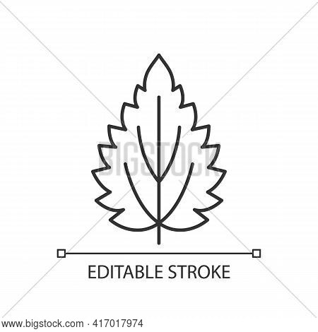 Nettle Linear Icon. Alternative Medicine. Herbal Ingredient For Homeopathy. Common Toxic Allergen. T