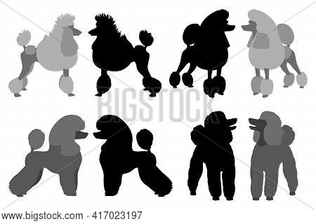 Poodle With Different Haircuts. Flat Design And Silhouette. Vector Illustration On White Background.