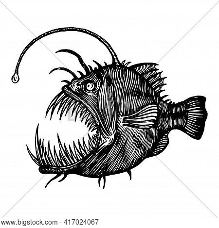 Angler Fish, Lophiiformes, Vector Illustration. Drawing With An Ink Pen And Pencil. A Collection Of