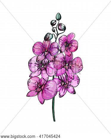 Beautiful Magenta Phalaenopsis Orchid Flowers. Hand-drawn Purple Flowers. Digital Illustration.