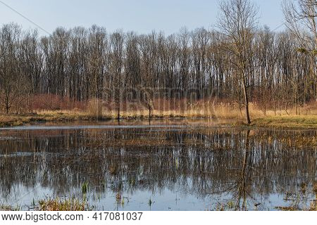 Natural Pond Near Floodplain Forest. There Is A Reed In The Pond And A Forest In The Background. The