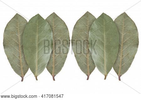 Bay Leaves On White Background. Spices Bay Leaves Isolated On White Background. Top View