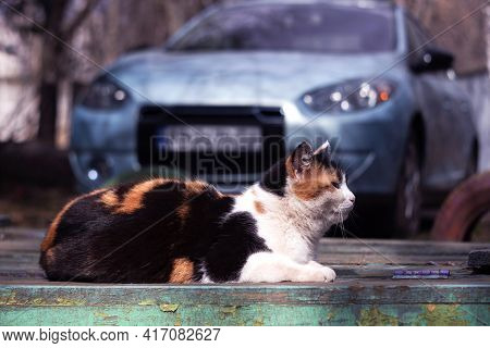 A Tricolor Cat Sits On The Background Of A Blue Car. Mammal Rests In The City