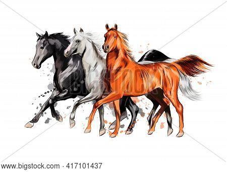 Three Horses Run Gallop From A Splash Of Watercolor, Hand Drawn Sketch. Vector Illustration Of Paint