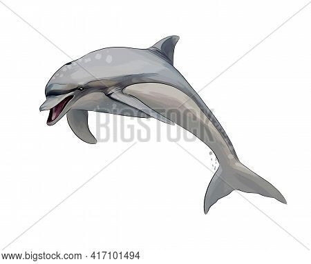 Dolphin From A Splash Of Watercolor, Colored Drawing, Realistic. Vector Illustration Of Paints