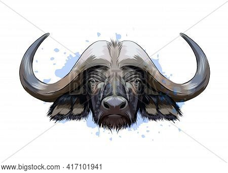 Bison, Buffalo Head Portrait From A Splash Of Watercolor, Colored Drawing, Realistic. Vector Illustr