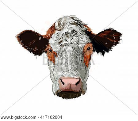 Brown Cow Head Portrait From A Splash Of Watercolor, Colored Drawing, Realistic. Vector Illustration